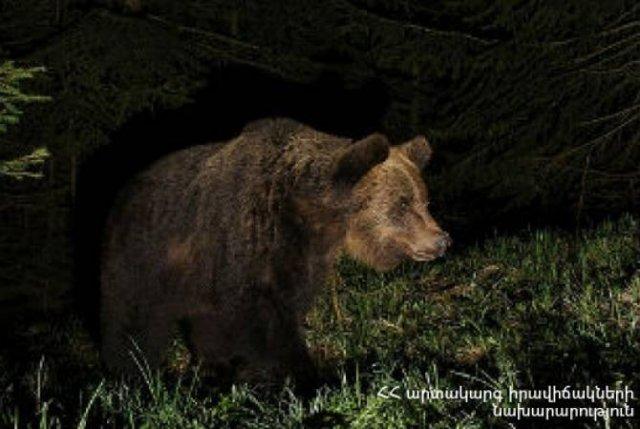 В селе Арпи медведь нанес вред домашним животным