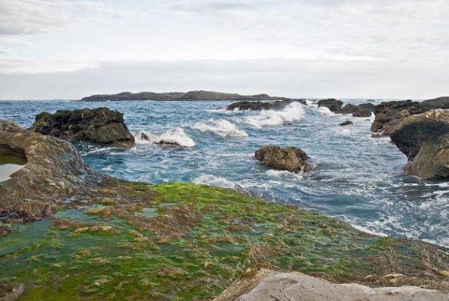 Минздрав рекомендует избегать купания в тех участках Севана, где в воде есть водоросли