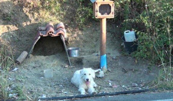 Греческий Хатико: собака поселилась на месте гибели хозяина