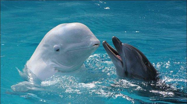 23 июля – Всемирный день китов и дельфинов