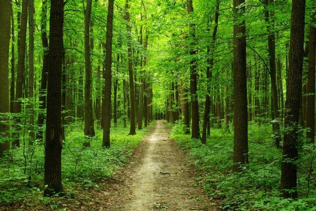 11,2% территории Армении все еще покрыто лесами