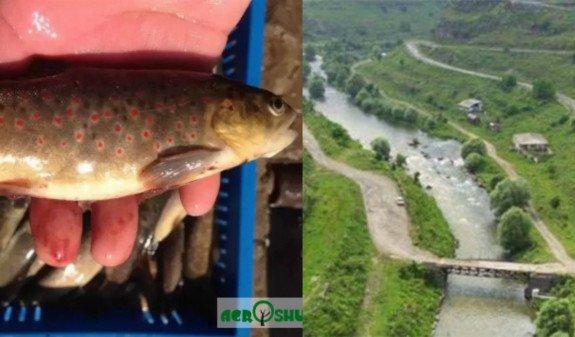 В Армении выясняют причины массовой гибели рыбы в реке Чкнах