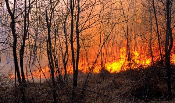 Специалисты раскрыли катастрофические последствия пожаров в Сибири