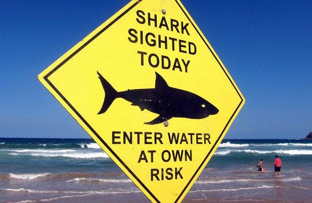 Во Флориде за сутки акулы напали на трех человек