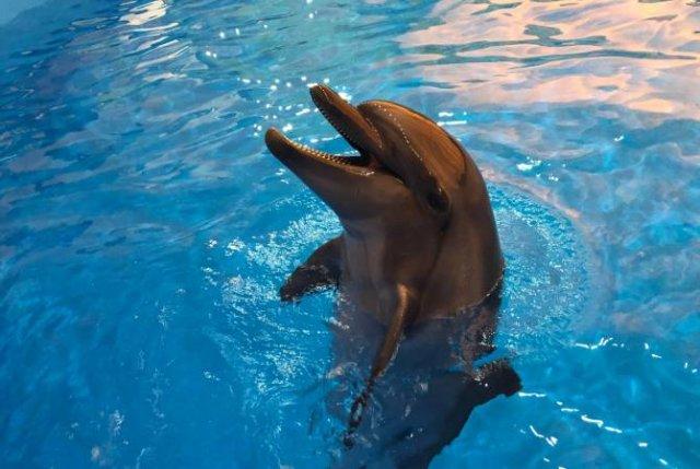 В Гюмри откроется дельфинарий