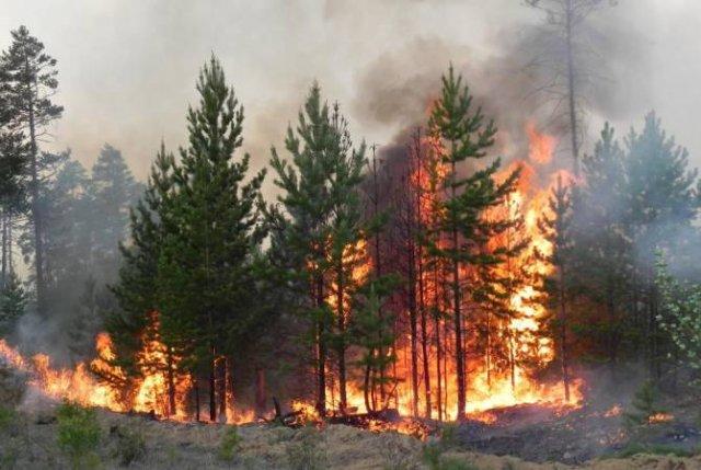 Правительство выделит из резервов почти 6 млрд рублей на тушение лесных пожаров