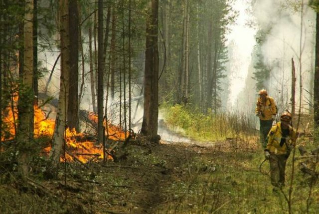 В Красноярском крае площадь лесных пожаров выросла на 50 тысяч гектаров