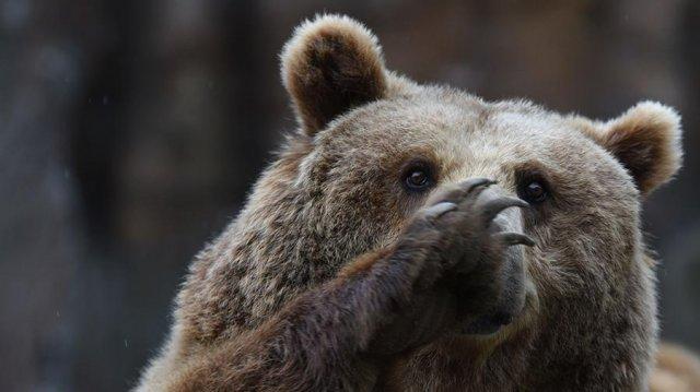 Медведь поджег полицейскую машину в США