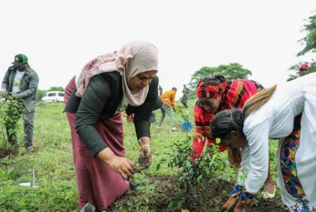 План Эфиопии посадить четыре миллиарда деревьев за год почти выполнен