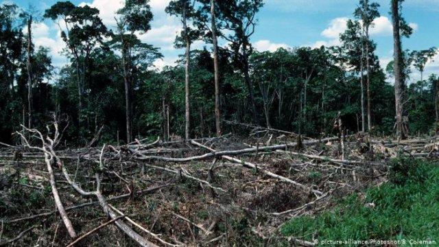 WWF: Популяция лесных зверей с 1970 года сократилось вдвое