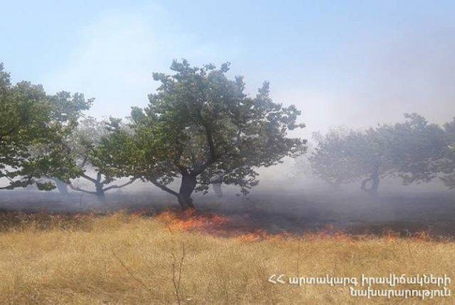 Зарегистрировано 47 случаев пожаров на травяных участках