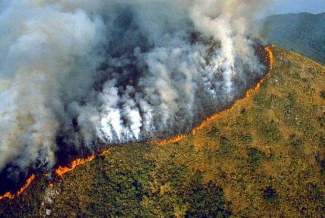 В лесах Амазонии зафиксировали рекордное количество природных пожаров