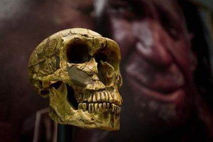 Найдена неожиданная причина вымирания неандертальцев