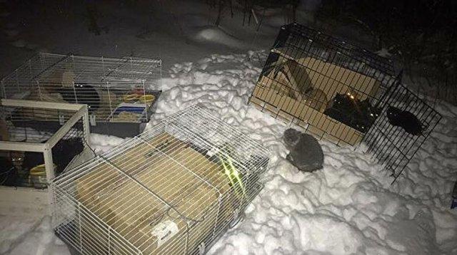 В Югре спасли три десятка кошек, брошенных на заснеженной трассе