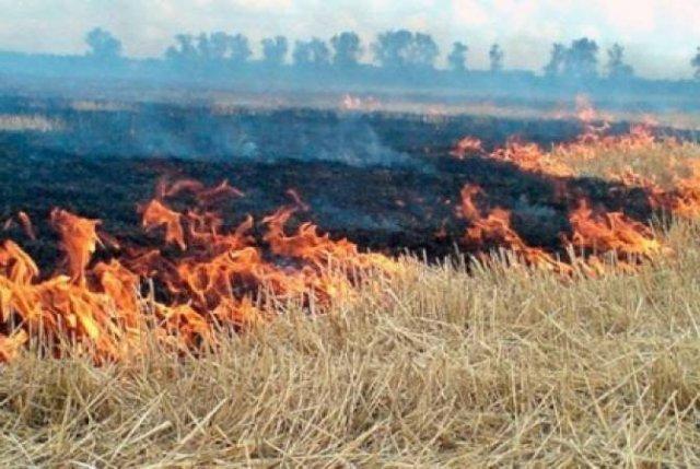 Спасатели потушили пожары на 60.5 га растительных участков
