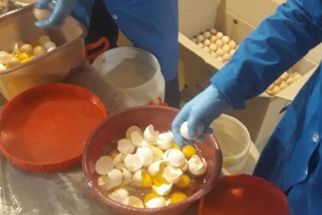 Инспекционный орган по безопасности пищевых продуктов уничтожил 54000 просроченных яиц